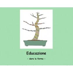 Educazione di un Bonsai
