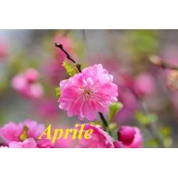 Lavori da fare nel mese  di Aprile
