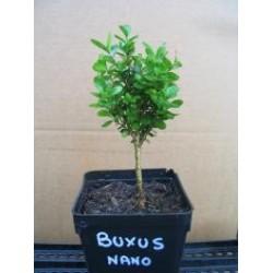 Buxus Nano