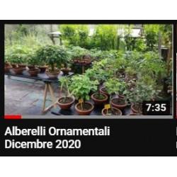 Albrelli Ornamentali
