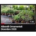 Alberelli Ornamentali Dicembre 2020
