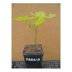 Farnia